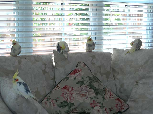 Birds Invade Gail's Couch