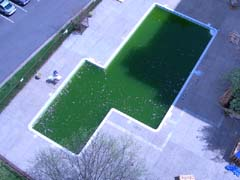 ugly green pool